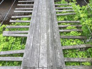 吊り橋2015,5の3