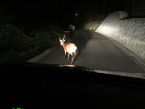 鹿ナイトさふぁり